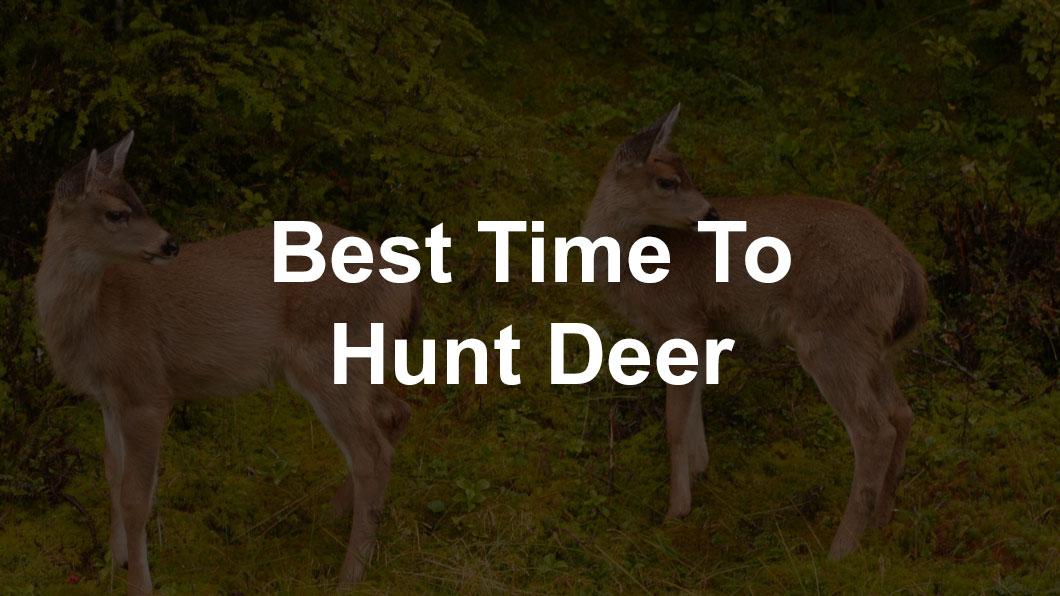 young deer in woods