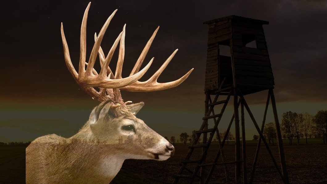 deer stand in field