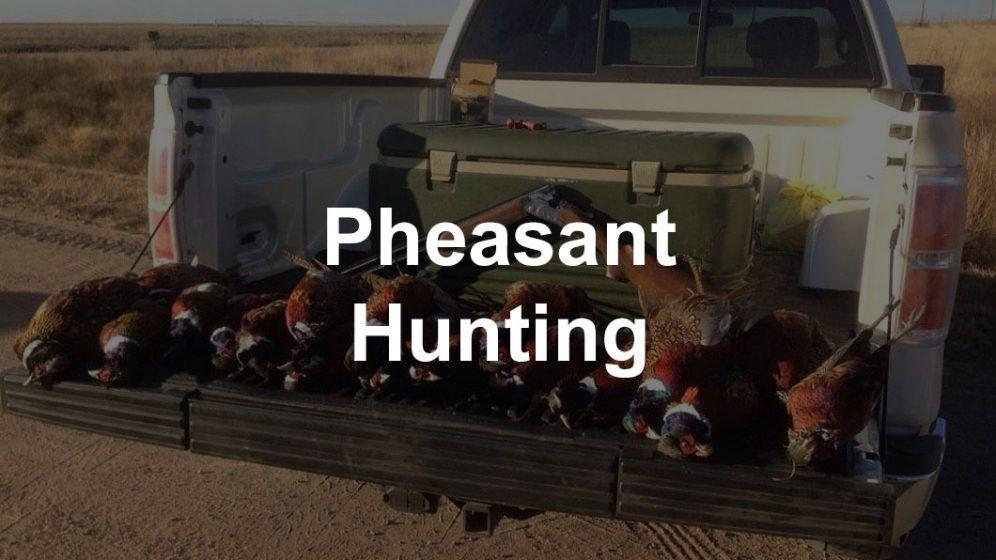 Pheasant Hunting Guide: Gear, Guns, And Tips