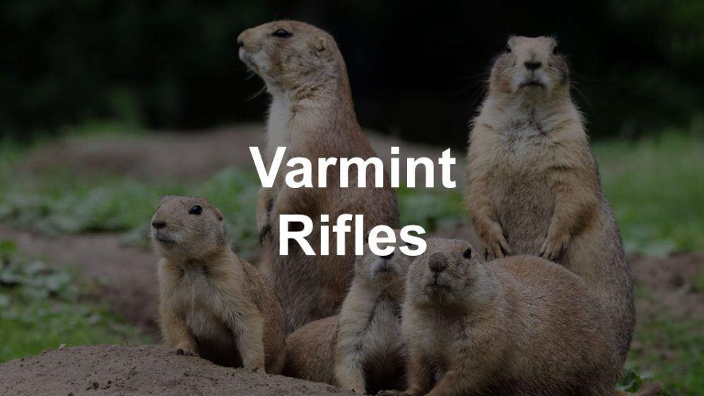 varmint prairie dogs